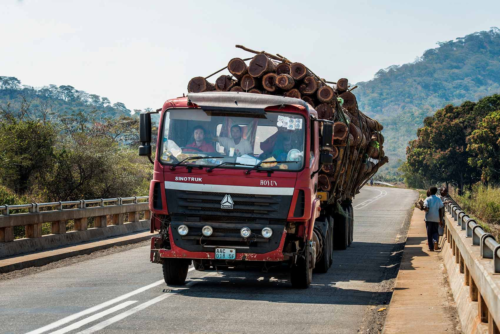 Chinese looting Mozambique's forests – Compass Media