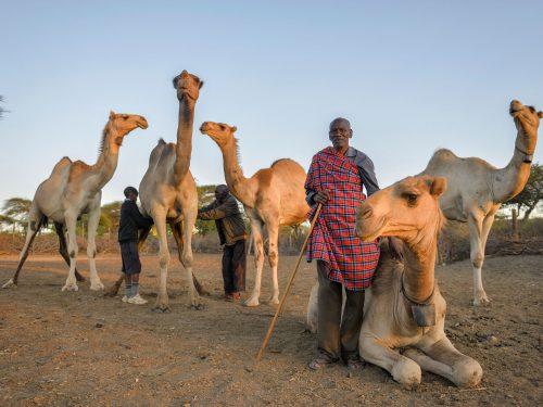 camelmilk